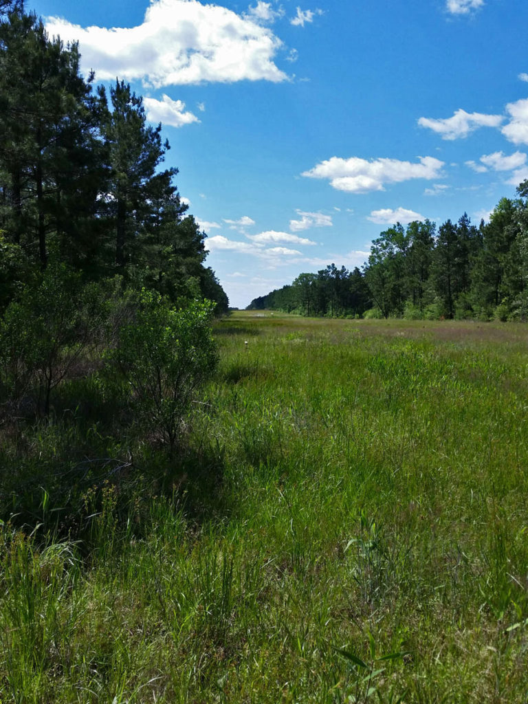 central texas remote wooded hunting property with cabins