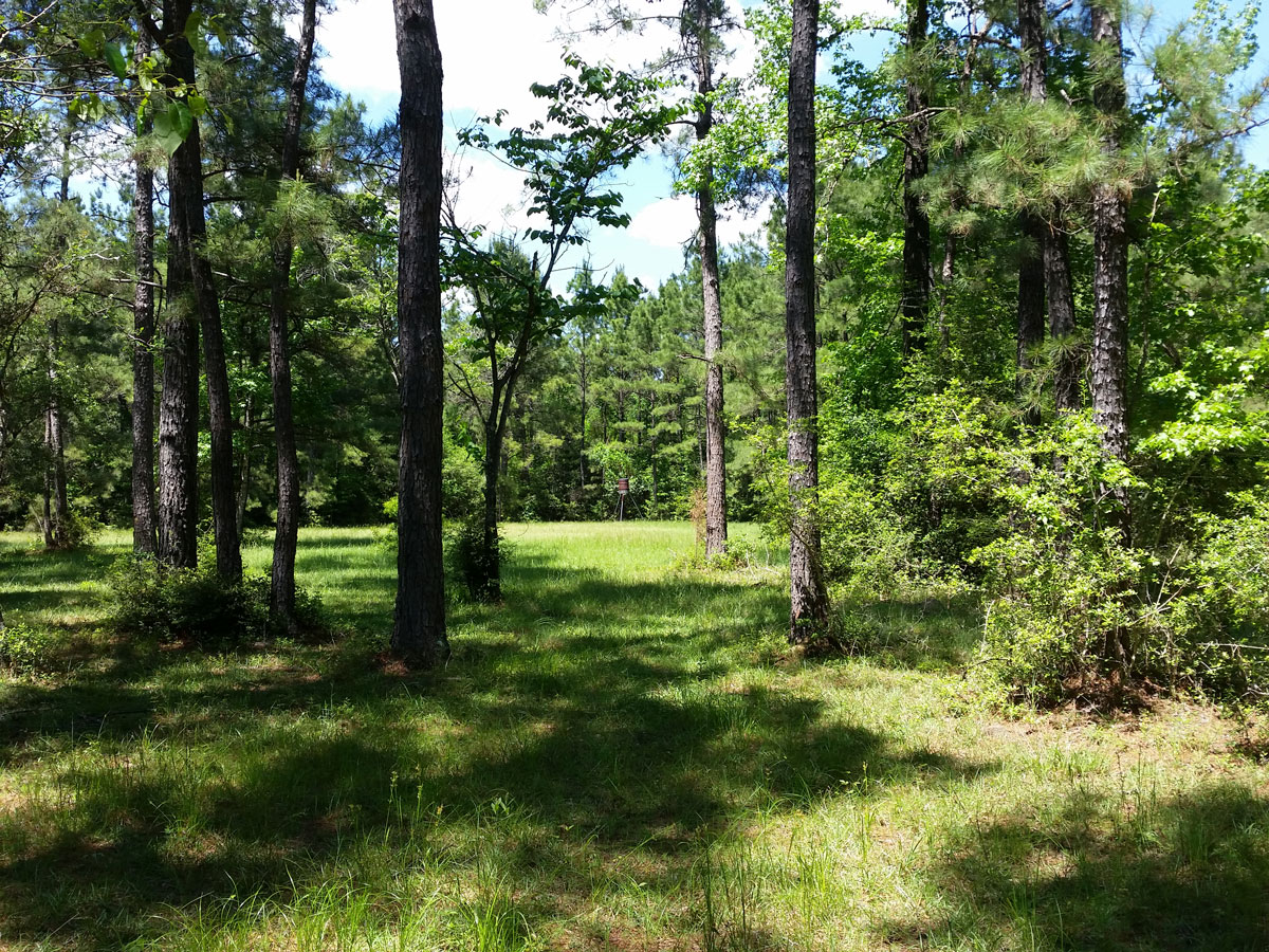 Photos - East Texas Property For Sale - Wooded Acreage with