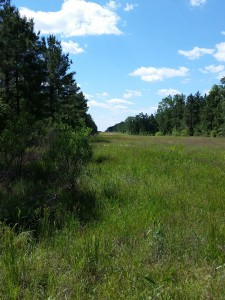 central texas hunting land meadow