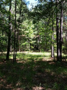 central texas hunting land pine trees