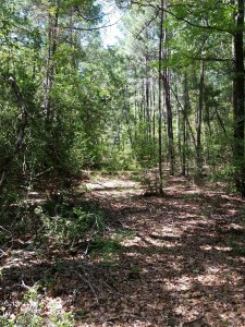 central texas hunting land wooded trail