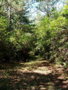hunting-cabin-3i-land