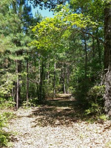 central texas wooded hunting land