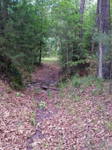 central Texas hunting cabin land with wooded trails