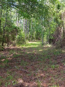 central texas hunting land with wooded trails