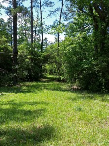 Central Texas land with wooded trails and meadows