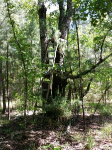 Central Texas land with tree blinds and wooded trails